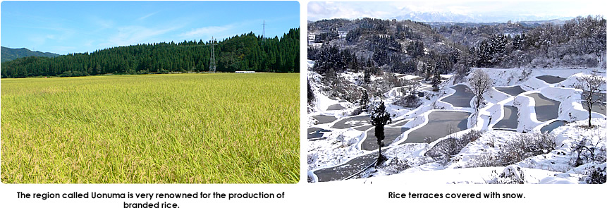 The region called Uonuma is very renowned for the production of  branded rice. Rice terraces covered with snow.